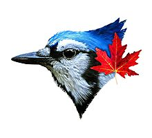 Blue Jays - For Real Photographic Print
