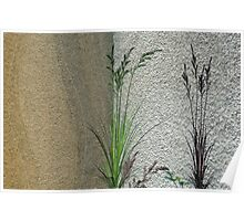 Grass on Wall  Poster