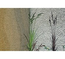 Grass on Wall  Photographic Print