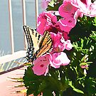 Sherry's Butterfly © by jansnow
