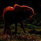 Dream Horses by Mustafa UZEL