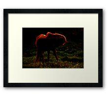 Dream Horses Framed Print