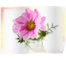 Cosmos in a glass jar Poster