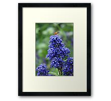 On top of the world! Framed Print
