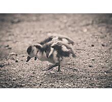Two little ducks Photographic Print