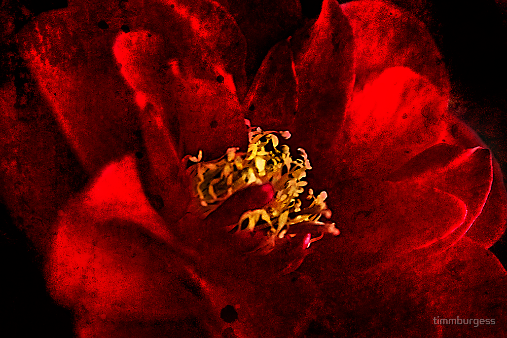 Camelia  by timmburgess