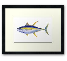 Yellowfin Tuna (Thunnus albacares) Framed Print
