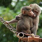 Monkey Love by kimberly89