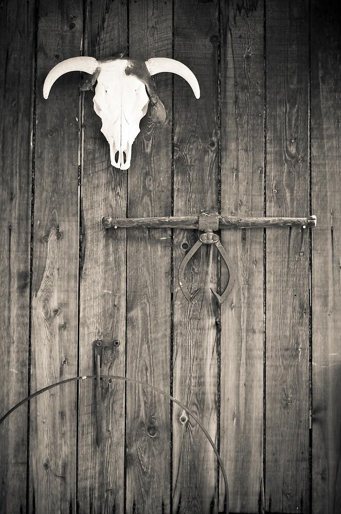 Taos Bull Skull by Matthew Osier