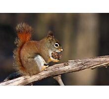Red squirrel in autumn Photographic Print