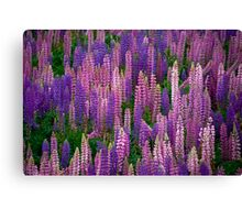 Lupins Lupins Lupins Canvas Print