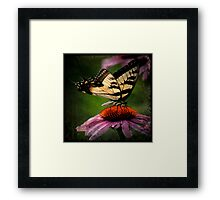 TTV-Water Color Beautiful Butterfly. Framed Print