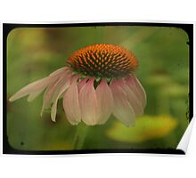 TTV-CONE FLOWER. Poster