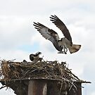 Nest day 82 by Carl LaCasse