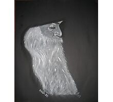 Osho Photographic Print