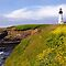 Yaquina Head  by TeresaB