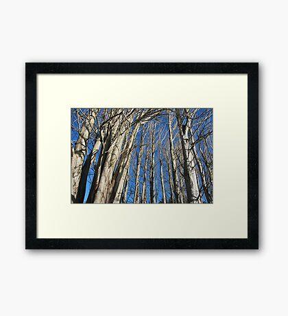 Tree Line Framed Print