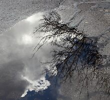 Puddle by sedge808