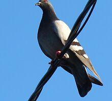 Bird on a wire by MarianBendeth