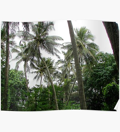 Coconut Palms Poster
