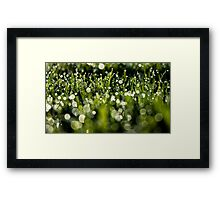 Grass and Dew Framed Print