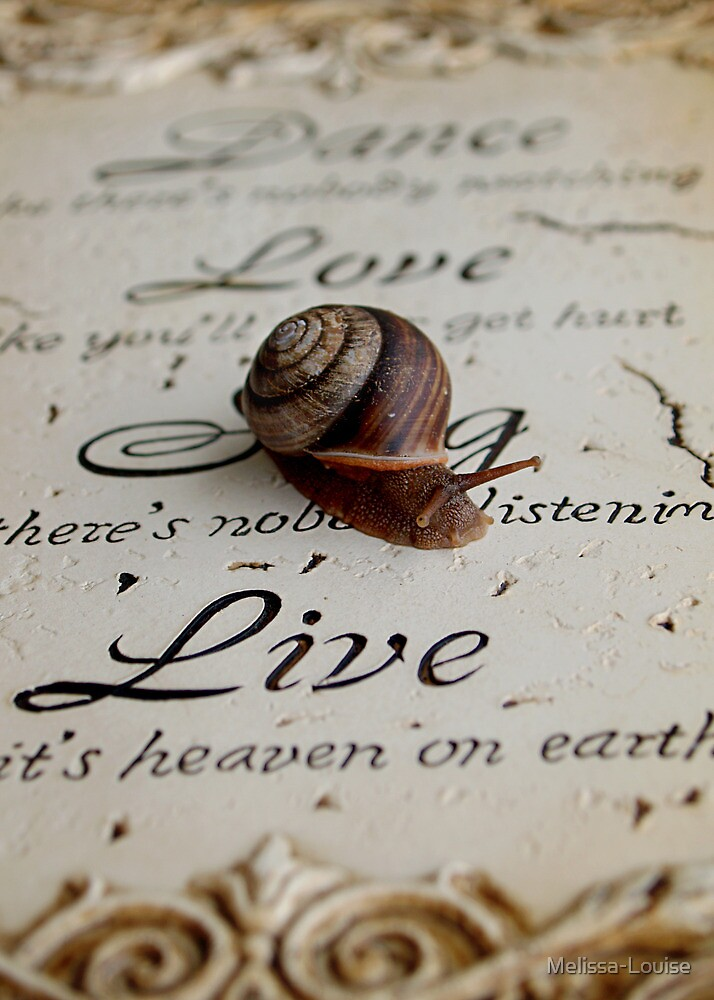 Philosophy of a Snail  by Melissa-Louise