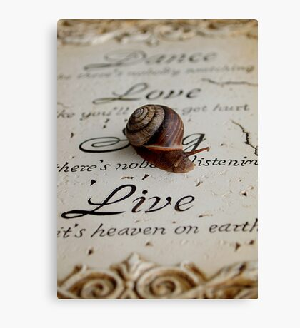 Philosophy of a Snail  Canvas Print