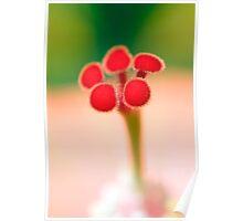 Hibiscus Stigma detail Poster