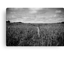 Lonely Corn Canvas Print