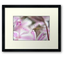 Insect on the phlox Framed Print