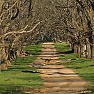 The Long Driveway in Winter by clearviewstock