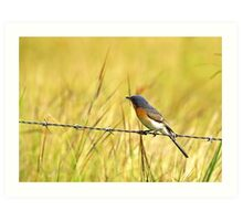 Bluebird on a Wire Art Print