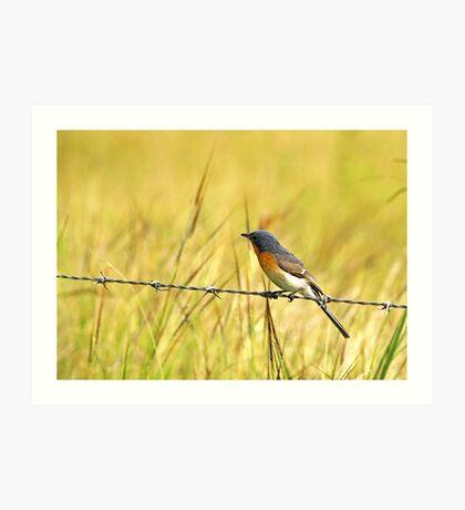 Bluebird on a Wire Art Print