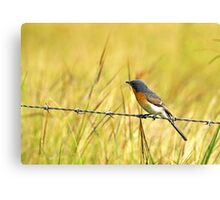 Bluebird on a Wire Canvas Print