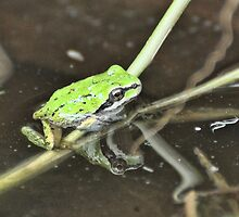 Tree Froglet and Grass by Carl Olsen