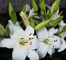 White Lilies by Rewards4life