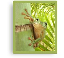 Frog Happy - Entices you to return his warm smile Canvas Print