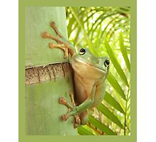 Frog Happy - Entices you to return his warm smile Photographic Print