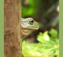 Frog-a-Boo by jono johnson