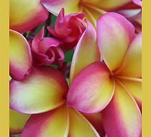 Rainbow Frangipani - Warming by jono johnson