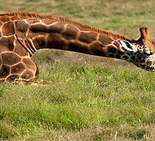 long Neck by Ian Creek