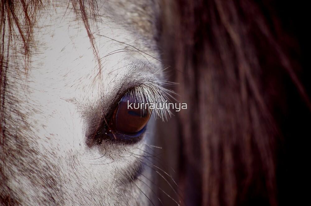 Lucilla by Penny Kittel