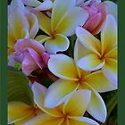 Fruit Salad Frangipani - Nice an Sweet by jono johnson
