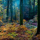 Path through the Woods by John Dewar