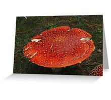 Fly Agaric, Amanita muscaria Greeting Card
