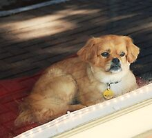 How Much Is that Doggie In the Window? by Patricia Miller