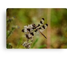Twelve Spotted Skimmer Dragonfly Canvas Print