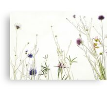 Wild summer blooms... Canvas Print
