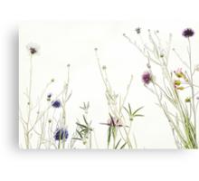 Wild summer blooms... Canvas Print