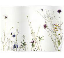 Wild summer blooms... Poster